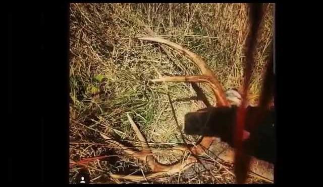 2014 hog/deer hunting