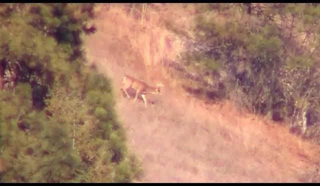 940 Yard Shot – Long Range Whitetail Buck Hunt – 270 WSM