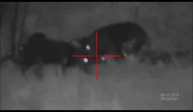 ATN X-sight 5x-18 Hog Hunting