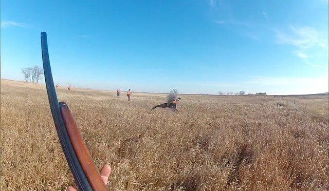 Best GoPro South Dakota Pheasant Hunting 2014