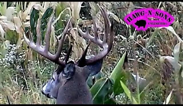 Biggest Whitetail Deer Hunting Killer Shots Ever Self Filmed – HawgNSonsTV