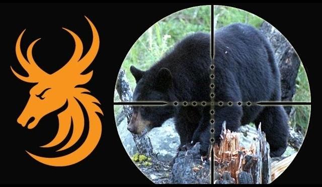 Black Bear Hunt in Newfoundland
