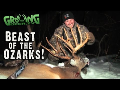 Bow Hunting Whitetails: 181″ Buck Killed In Missouri