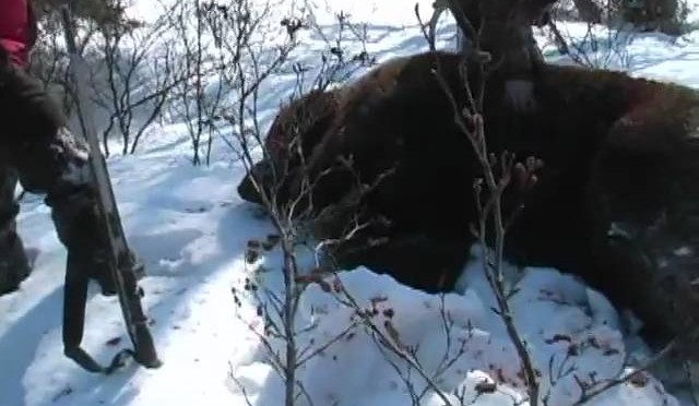 Brown Bear Hunt with Nushagak Guides in Alaska Trophy Hunter Magazine