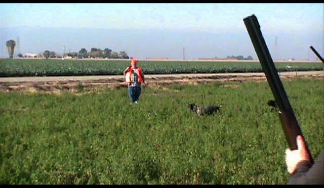 California Pheasant Hunts' Best Video!!!