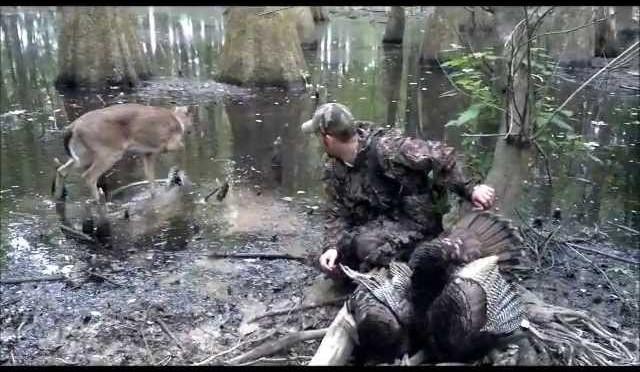 craziest public land turkey hunt ever.