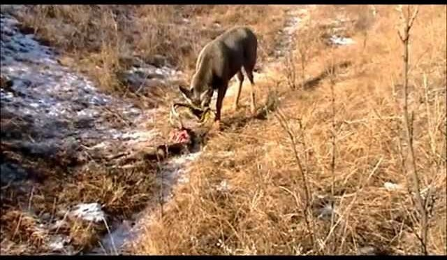 Deer Hunting Footage: Amazing!!!