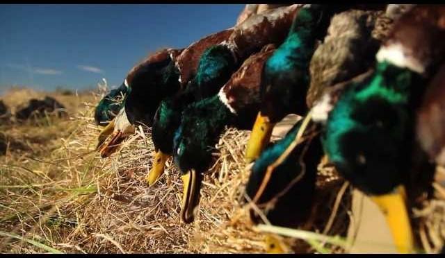 Duck Hunting Late Season In Missouri
