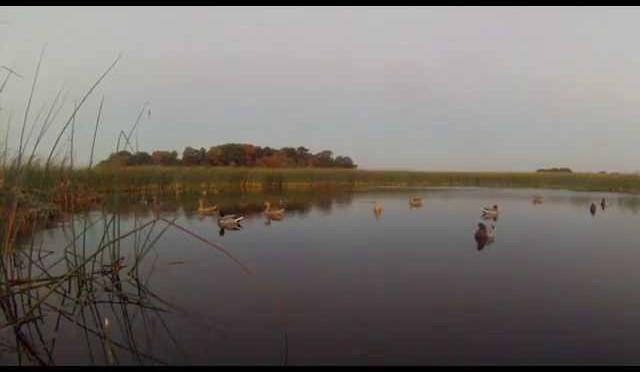 Duck Hunting MN (Opener '14)