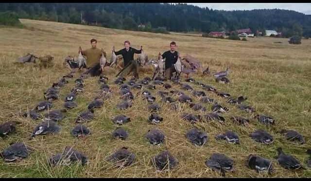 Gåsejakt 2015 – 87 gjess på en dag | Goose hunting 2015 – 87 geese in one day