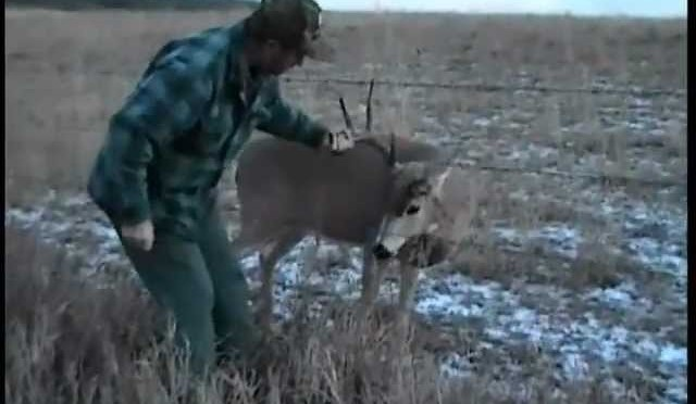 How to catch a whitetail deer with your hands