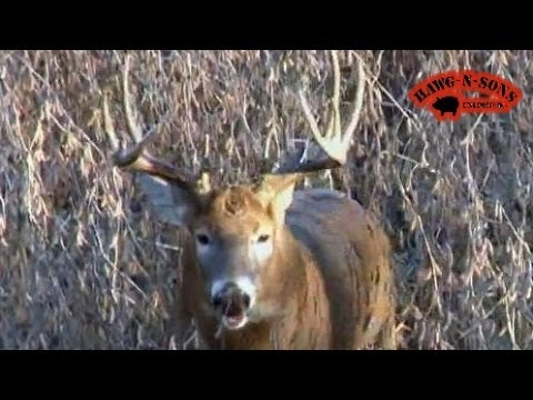 Hunting Whitetail Deer Grunting Buck Charges – Animal Attacks RUT November 9 – 14