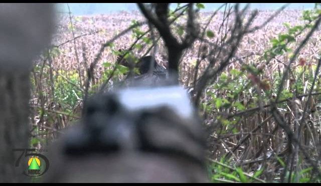 May 4th OD: Turkey Hunt with a Pistol