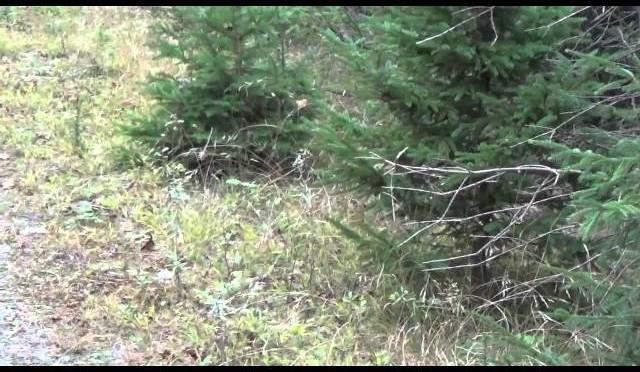 Moose hunt 2015(12)