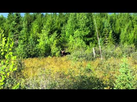 Moose hunting with Maine Quest Adventures Bryant D