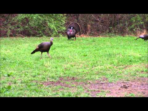 Ohio Spring Turkey Season – 2015