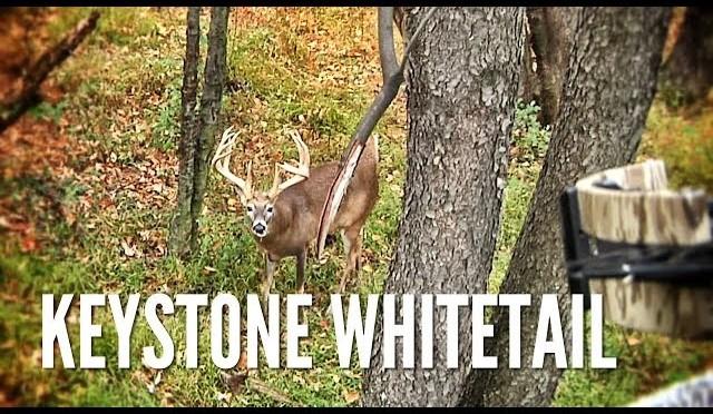 Pennsylvania Deer with a Crossbow