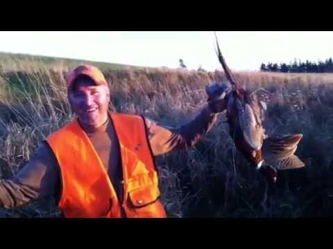 Pheasant hunting in Nova Scotia