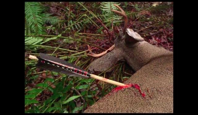 Primitive Archery Hunting for Deer. Otzi Arrow. Ishi Arrow. Traditional Bowhunting