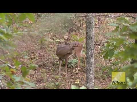 Road Trip:  Hunting Georgia Whitetails with Foxworthy Outdoors By GrowingDeer.tv