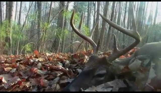 """South Carolina"" South Carolina Whitetail Hunt"