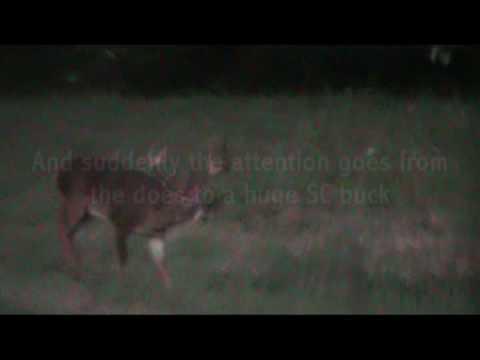 south carolina whitetail deer hunting coates outdoors