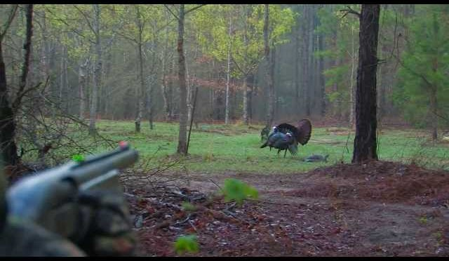 South Georgia Turkey Hunt With My Dad