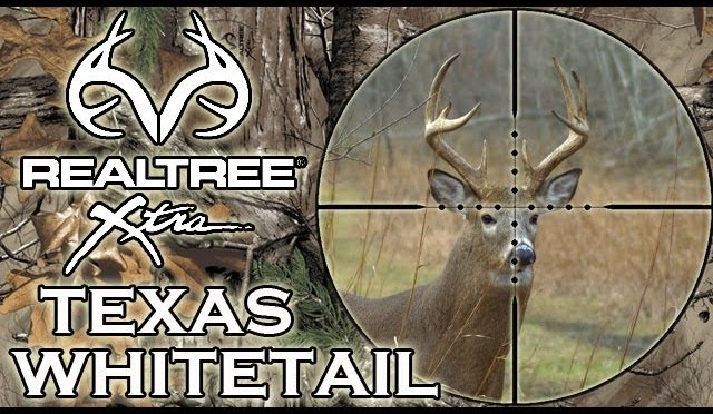 Texan Whitetail Deer Hunt