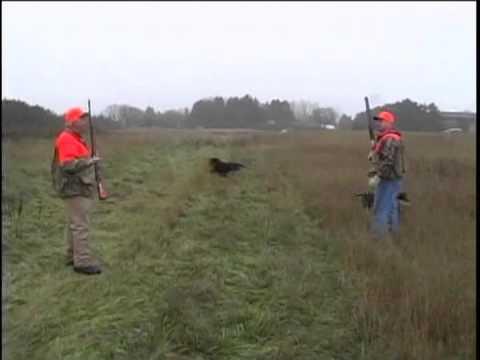 Tom Knapp Pheasant Hunt
