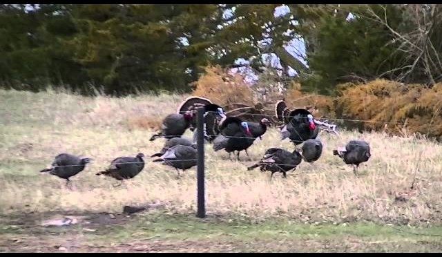 Turkey Hunt Nebraska