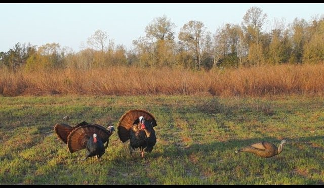 Turkey Hunting 2013 with Deibler Outdoors
