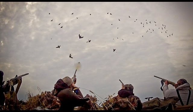 Waterfowl Hunting: So You Want To Be A Waterfowl Hunter – Fowled Reality