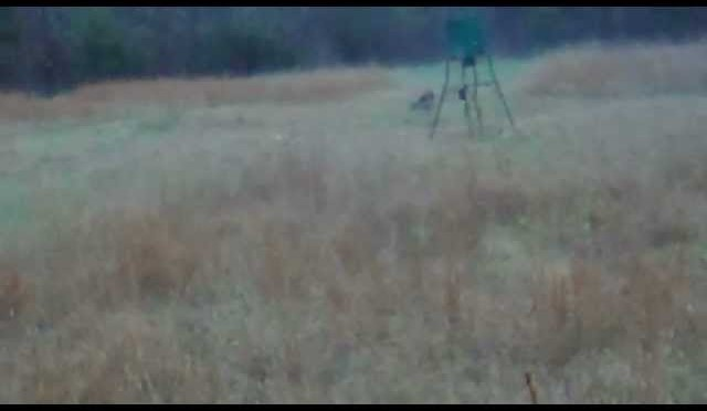 Whitetail Deer Hunt December 22 North Carolina