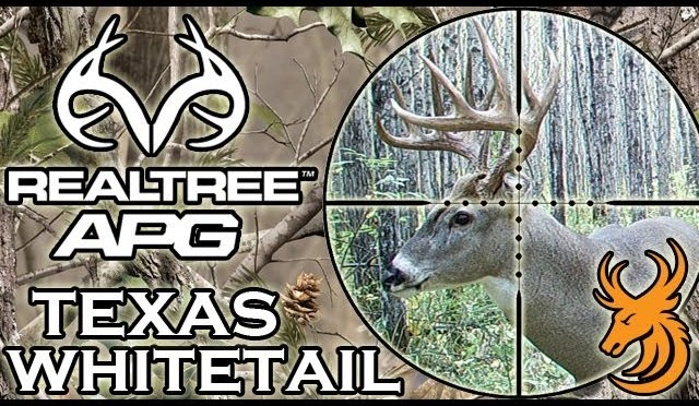 Whitetail deer hunt in Texas