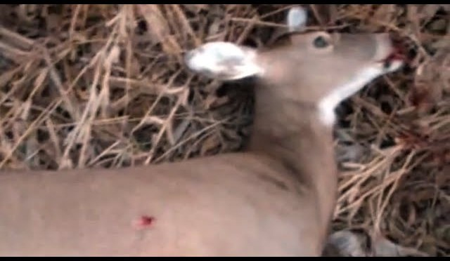 Whitetail Deer Hunt – Muzzleloader Doe Kill
