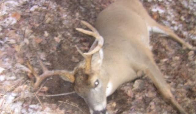 Whitetail Deer Hunting, 8 Point Buck Kill, NY 2011