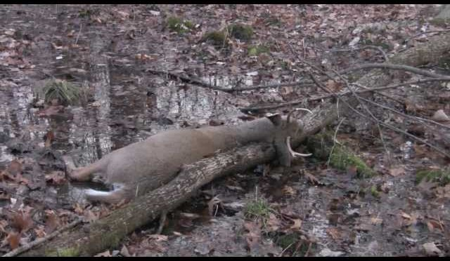 Whitetail Deer Hunting, Buck Kill 2011,  NY