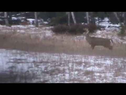 Whitetail Deer Hunting for BIG BUCKS- Opening Day NICE ONE- Door County, Wisconsin November 22, 2014