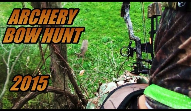 Bow Hunting Deer + RARE Black Pennsylvania Mountain Lion! – 2015