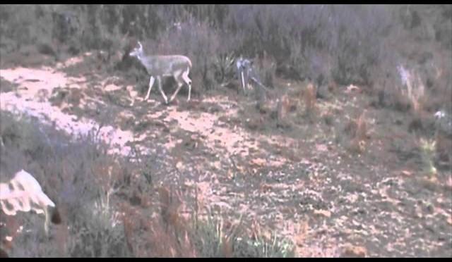 Camo Cams Thanksgiving Deer Hunt