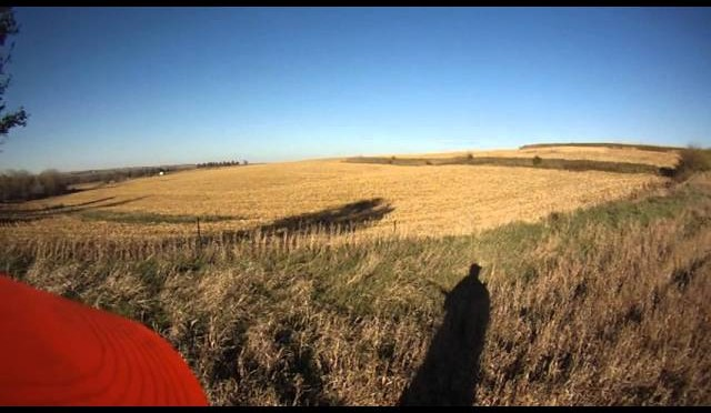NW iowa pheasant hunting 1