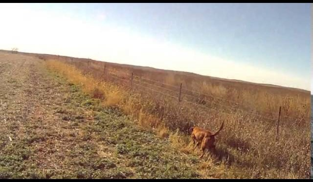 SD Pheasant Hunt 10 22 15
