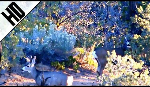 Utah Mule Deer Hunt 2015 HD