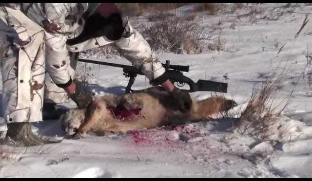 338 lapua vs coyote