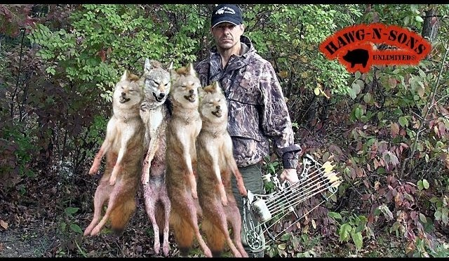 BEST DEER HUNTING COYOTE KILLING VIDEO EVER!!!