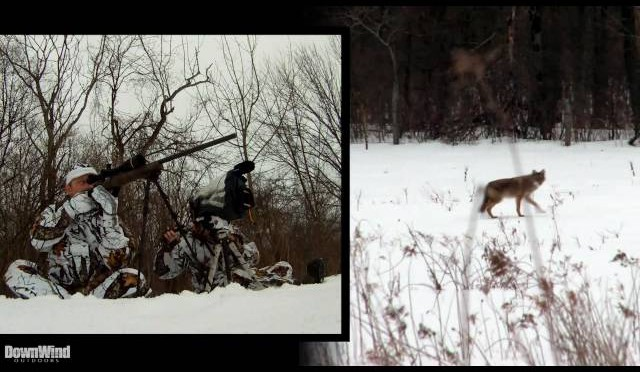Coyote Hunting: Perfect Setup (DownWind Outdoors)