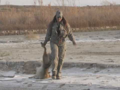 coyote hunting with rachelle frasure