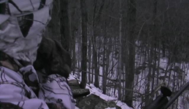 Eastern Coyote Hunting deep woods state land, called in a Fisher