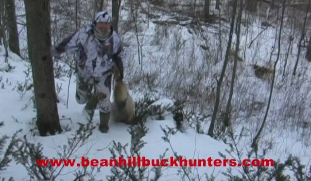 Eastern Coyote Hunting in Upstate New York: late morning setup in the woods yields another dog
