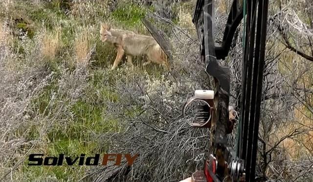 Extreme Close Range Archery POV Coyote Hunting – Solvid FIY